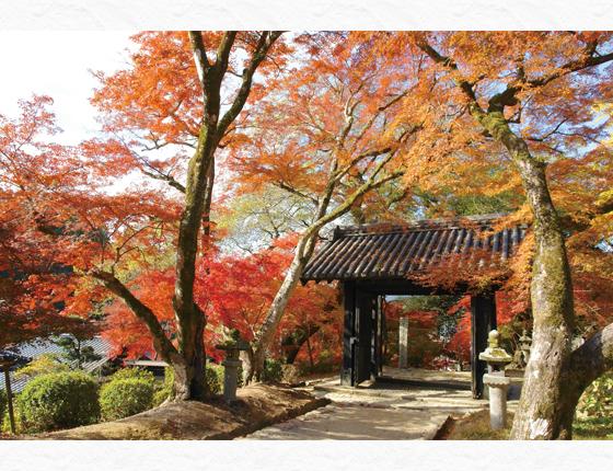 福岡県朝倉市(秋月黒門)