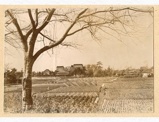 帝釈天と田畑の風景(昭和初期)